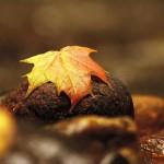 Zadbajmy o naszą odporność! Jak możemy się bronić przed chorobą w okresie jesienno-zimowym (i nie tylko)? Cz.1. Czosnek, aloes i jeżówka purpurowa.