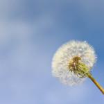 Katar sienny w natarciu, czyli kilka(naście) słów o alergicznym nieżycie nosa.
