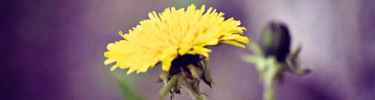 kwiaty_blog
