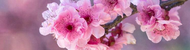 wiosna_blog2